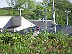 Tsuboi_spring_121_2